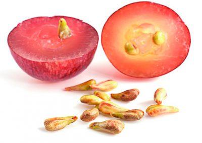 Pepita de uva