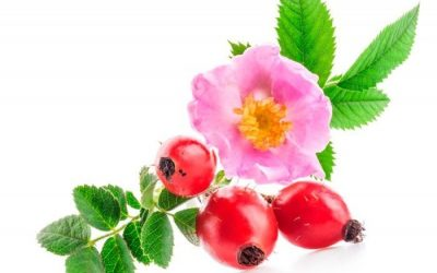 ROSEHIP SEED OIL AND ITS TYPES